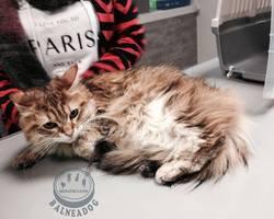 BALNEADOG - Grenoble - Les chats
